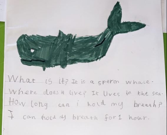 Year 1 Having a Whale of a Time